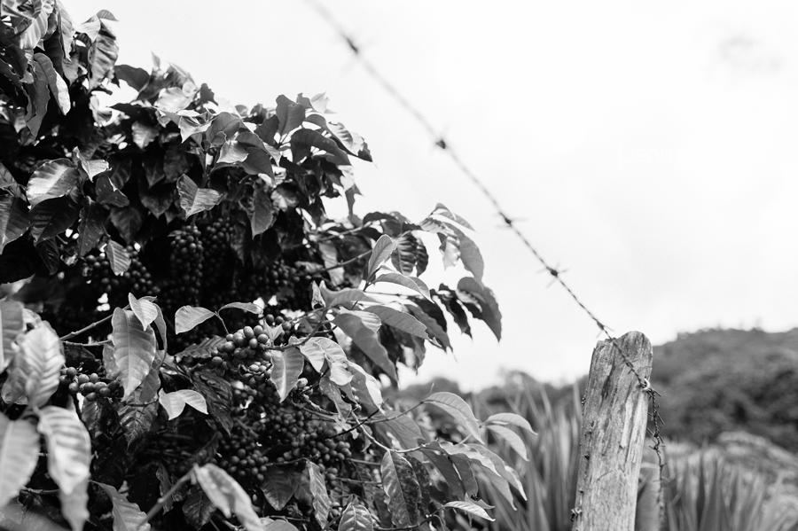 Guatemala-Travel-Photography-16